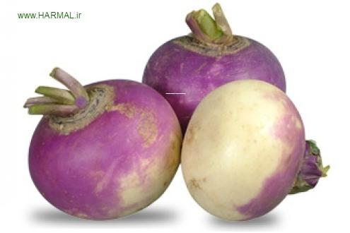 خواص درمانی شلغم در طب سنتی اطلس گیاهان دارویی حرمل (2)