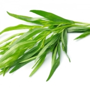 خواص ترخون - اطلس گیاهان دارویی