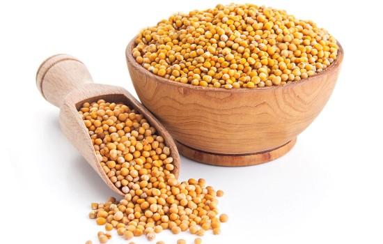 خواص دانه خردل زرد یا قهوه ای